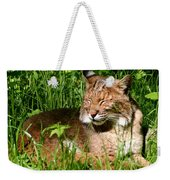 The Bobcat's Afternoon Nap Weekender Tote Bag