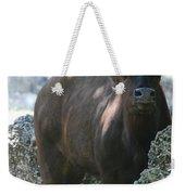 The Bull Moose Weekender Tote Bag