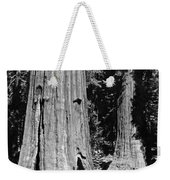 The Mariposa Grove In Yosemite Weekender Tote Bag