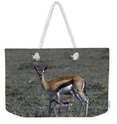 Thomson Gazelle And Newborn Calf Weekender Tote Bag