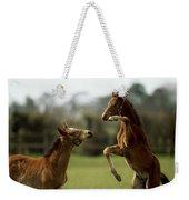 Thoroughbred Foals Playing Weekender Tote Bag