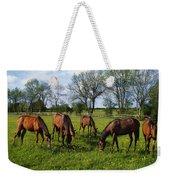 Thoroughbred Horses, Yearlings, Ireland Weekender Tote Bag