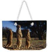 Three Meerkats With Paws Poised Neatly Weekender Tote Bag