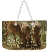 Three White-tailed Deer Fawns Weekender Tote Bag