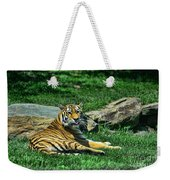 Tiger - Endangered - Lying Down - Tongue Out Weekender Tote Bag