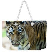 Tiger - Endangered - Wildlife Rescue Weekender Tote Bag