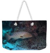 Tiger Grouper Swimming Along The Bottom Weekender Tote Bag