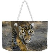 Tiger Panthera Tigris Cub, Native Weekender Tote Bag