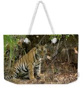 Tiger Panthera Tigris Six Month Old Weekender Tote Bag