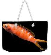Tiger Queen Anthias Weekender Tote Bag