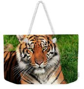 Tiger Sitting In The Grass Weekender Tote Bag
