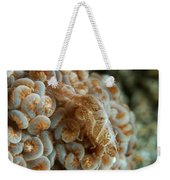 Tiny Cryptic Brown And Grey Shrimp Weekender Tote Bag