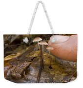 Tiny Microhylid Frog Papua New Guinea Weekender Tote Bag