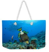 Titan Triggerfish Picking At Coral Weekender Tote Bag