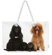 Toy Poodle Family Weekender Tote Bag