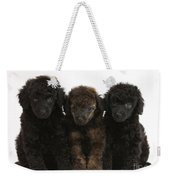 Toy Poodle Pups Weekender Tote Bag