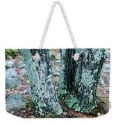 Tree Trio In Lichen At Hawn State Park Weekender Tote Bag