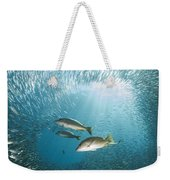 Trio Of Snappers Hunting For Bait Fish Weekender Tote Bag