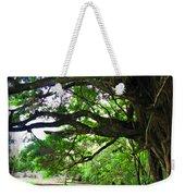 Tropical Banyan Path Weekender Tote Bag