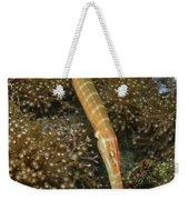 Trumpet Fish, Lembeh Strait, Bitung Weekender Tote Bag by Mathieu Meur