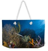 Trumpetfish, Belize Weekender Tote Bag