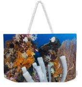 Tube Sponge On Coral Reef In Raja Weekender Tote Bag