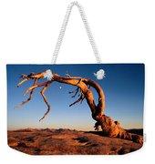 Twilight View Of A Jeffrey Pine Tree Weekender Tote Bag