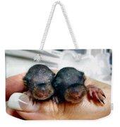 Twin Baby Squirrels Weekender Tote Bag