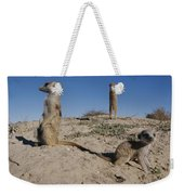 Two Adult Meerkats Suricata Suricatta Weekender Tote Bag