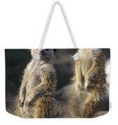 Two Meerkats, Suricata Suricatta, Stand Weekender Tote Bag