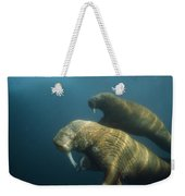 Two Pacific Walruses Swim Together Weekender Tote Bag