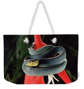 Two-striped Forest Pit Viper Bothrops Weekender Tote Bag