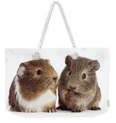 Two Young Guinea Pigs Weekender Tote Bag