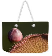 Victoria Amazonica Bud And Leaf Weekender Tote Bag
