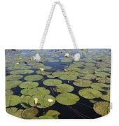 Water Lily Nymphaea Sp Flowering Weekender Tote Bag