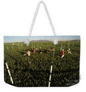 Wheat And Elevated Carbon Dioxide Weekender Tote Bag by Science Source