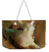 White And Red Clown Frogfish, Bali Weekender Tote Bag by Mathieu Meur