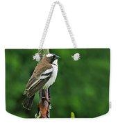 White-browed Sparrow-weaver Weekender Tote Bag