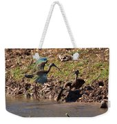 White-faced Ibis Mating Behavior In Early Spring Weekender Tote Bag