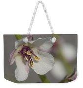 White Mullein - Verbascum Lychnitis Wildflower Weekender Tote Bag