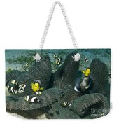 Whole Family Of Clownfish In Dark Grey Weekender Tote Bag by Mathieu Meur