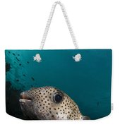 Wide-angle Image Of Pufferfish, Raja Weekender Tote Bag