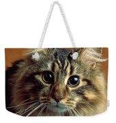 Wide-eyed Maine Coon Cat Weekender Tote Bag