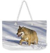 Wolf Canis Lupus Walking In Snow Weekender Tote Bag