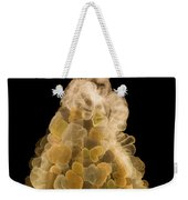 X-ray Of Fall Decorative Gourd Weekender Tote Bag