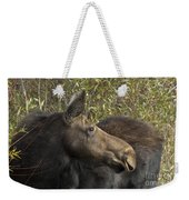 Yearling Calf On Alert Weekender Tote Bag