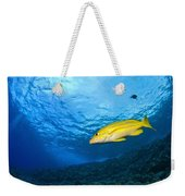 Yellowtail Snapper, Molokini Crater Weekender Tote Bag