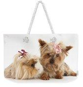 Yorkshire Terrier And Guinea Pig Weekender Tote Bag