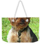 Yorkshire Terrier In Park Weekender Tote Bag