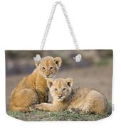 Young African Lion Cubs  Weekender Tote Bag